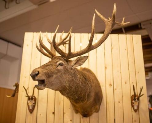Tierpräparat Treffpunkt Jagd 2018